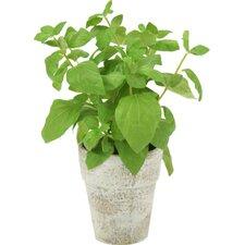 Silk Basil Spray Floor Plant in Pot