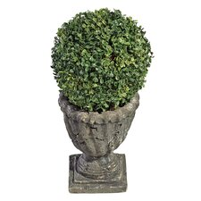 Boxwood Ball Floor Plant in Urn