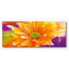 Glasbild Orange Daisy - 50 x 125 cm