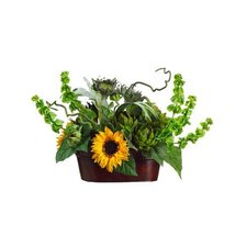 Sunflower / Artichoke / Staghorn in Metal Container