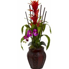 Bromedliad and Orchid Combo with Planter