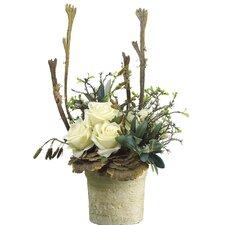 Rose/Mushroom/Staghorn in Clay Pot