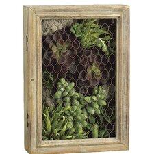 Echeveria/Aloe/Sedum in Wood Mesh Box
