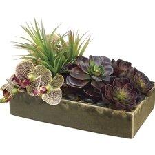 Echeveria/Phalaenopsis Orchid/Yucca in Ceramic Container