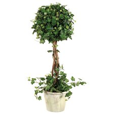 Curily Plant Ivy Round Tree in Pot