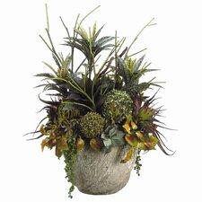 Succulent, Dracaena, Coleus in Pot