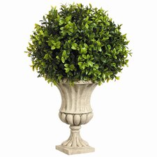 Boxwood Ball in Resin Urn (Set of 2)