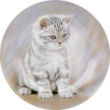 """19cm Teller """"Getigertes Kätzchen"""" aus Bone China"""