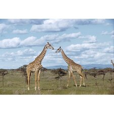 National Geographic Giraffes Wall Mural