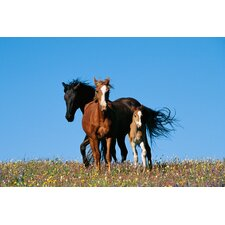 National Geographic Wild Horses Wall Mural