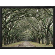 'Moss-Covered Plantation Trees, Charleston, South Carolina, USA' by Adam Jones Framed Photographic Print