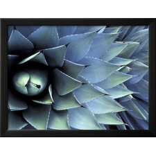 'Pattern in Agave Cactus' by Adam Jones Framed Photographic Print