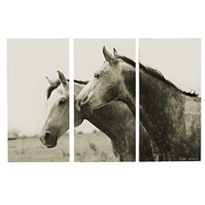 Arabian Horses 3 Piece Photographic Print on Wrapped Canvas Set