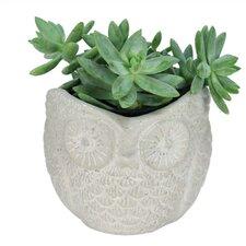 Nature's Garden Novelty Owl Pot Planter (Set of 2)