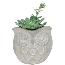 Nature's Garden Novelty Pot Planter (Set of 3)