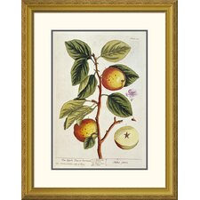 'Apple Tree' by Elizabeth Blackwell Framed Wall Art