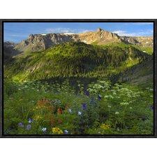 Wildflower Meadow Looking Towards Mount Sneffels Wilderness, Yankee Boy Basin, Colorado by Tim Fitzharris Framed Photographic Print on Canvas