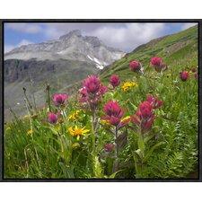 Paintbrush Flowers, Yankee Boy Basin, Colorado by Tim Fitzharris Framed Photographic Print on Canvas