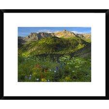Wildflower Meadow Looking Towards Mount Sneffels Wilderness, Yankee Boy Basin, Colorado by Tim Fitzharris Framed Photographic Print