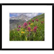 Paintbrush Flowers, Yankee Boy Basin, Colorado by Tim Fitzharris Framed Photographic Print