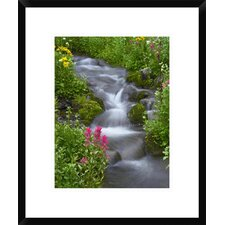 Sneezeweed and Indian Paintbrush, Yankee Boy Basin, Colorado by Tim Fitzharris Framed Photographic Print