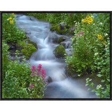 Sneezeweed and Indian Paintbrush Beside Stream, Yankee Boy Basin, Colorado by Tim Fitzharris Framed Photographic Print on Canvas