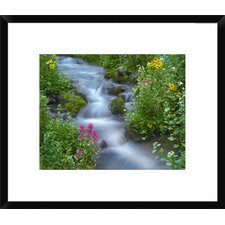 Sneezeweed and Indian Paintbrush Beside Stream, Yankee Boy Basin, Colorado by Tim Fitzharris Framed Photographic Print
