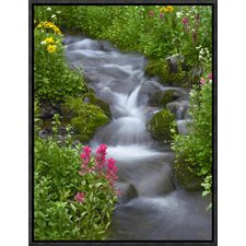 Sneezeweed and Indian Paintbrush, Yankee Boy Basin, Colorado by Tim Fitzharris Framed Photographic Print on Canvas