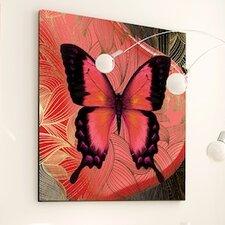 Metamorphosis Butterfly Framed Graphic Art