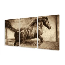 Galloping Stallion Horse 3 Piece Photographic Print Wrapped Canvas Set