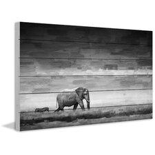 Elephant Photographic Print on Wood