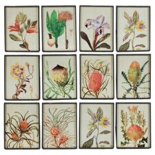 Exotic Bloom Wall Decor Framed Graphic Art (Set of 12)