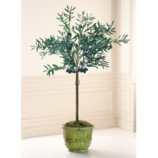 Olive Tree in Tuscan Urn