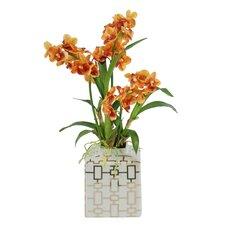 Vanda Orchids in Ceramic Container Floral Arrangement