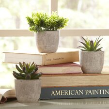 Round Potted (Set of 3)