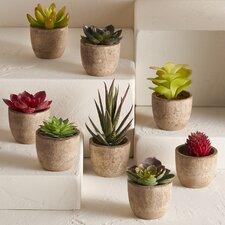 8 Piece Covina Faux Succulent Set
