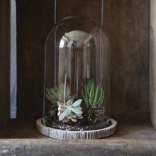 Decorative Glass Cloche with Cement Base