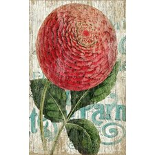"""Zinnia Red"" by Suzanne Nicoll Graphic Art Plaque"