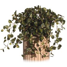 Floral Pepperomia Desk Top Plant in Decorative Vase