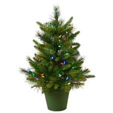 Cashmere 2' Green Pine Artificial Christmas Tree 50 LED Multi-Colored Lights