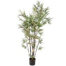 Deluxe Bamboo Tree in Round Pot