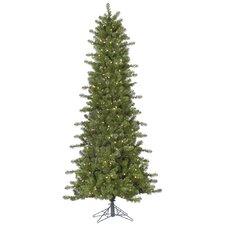 Slim Ontario Spruce