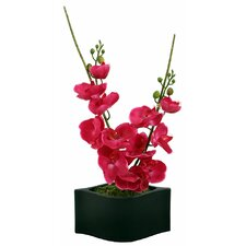 Floral Orchid in Wave Container