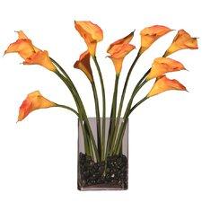 Floral Dozen Callas in Water