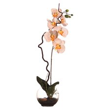 Floral Orchid in Soil