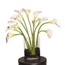 Floral Callas
