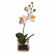 Floral Orchid in Square Vase