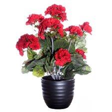 Floral Geranium with Ceramic Pot