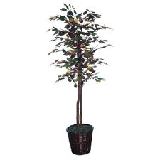 Nisswa Berry Economy Mystic Ficus Tree in Basket