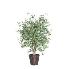 Blue Olive Tree in Basket